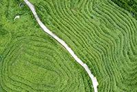 贵州大山里的壮美梯田
