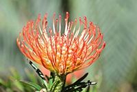 悉尼皇家植物園春暖花開