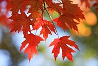 京城赏红叶的最佳地