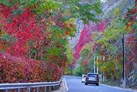 京郊赏秋正当时