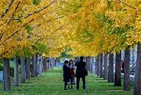 上海的深秋好惊艳
