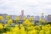 天生丽质的花园城市
