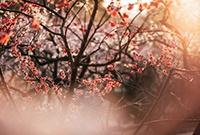 无锡梅园的第一缕阳光