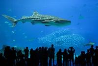 世界上最大的鱼类