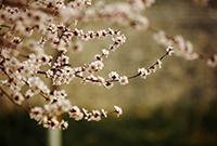 明城墻遺址公園的春天