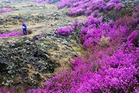 镜泊湖:火山台地正芳菲