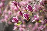 最美四月赏花季