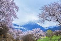 雪域高原的春天