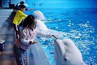与白鲸亲密接触