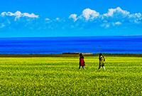 夏日的青海湖有多美