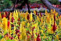 哈尔滨植物园慢时光