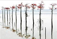 大泉湖獨特景觀