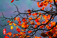 石门坊的秋天