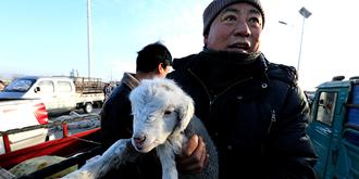 袖中议价,滩羊的独特交易