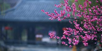 最中国的台儿庄古城