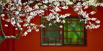 春天的岱庙美成一幅画