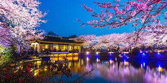 中国第一赏樱胜地