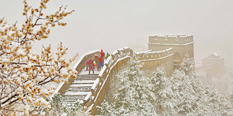 金山岭长城雪伴杏花奇观