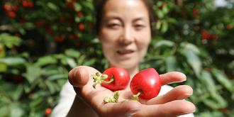厉害了!樱桃卖180元一斤