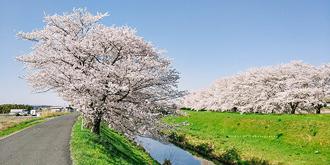 日本樱花季手机拍摄报告
