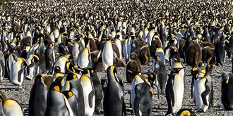 企鹅王国!真正的鹅山鹅海