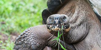 加拉帕戈斯巨龟传