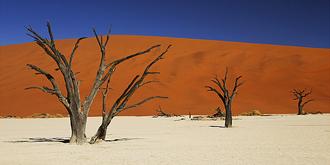 纳米比亚死亡谷诡异景象