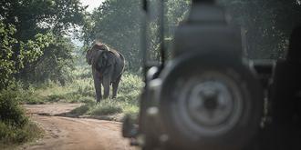 """我们被大象""""打劫""""了"""