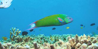 来昆士兰不能错过大堡礁