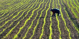 内蒙农民耕种忙