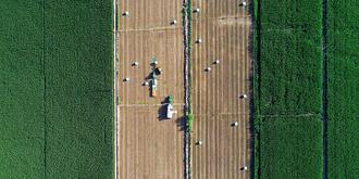 蓿草收割的大地画卷