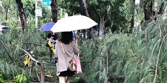 台风过后上班仿若丛林穿越