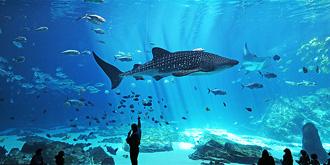 世界最大海洋馆