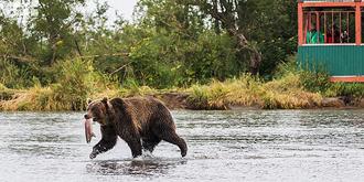在全球最佳观熊地露营