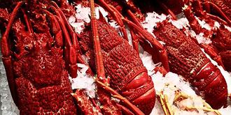 这里有最新鲜的海鲜食材