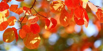 京城红叶早早泛红
