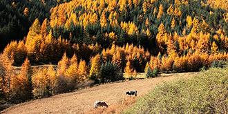 这里的秋色与众不同