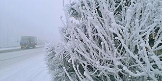 偶遇2019年北京第一场雪