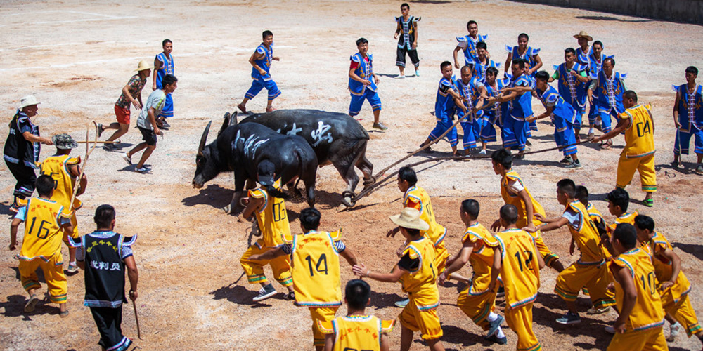 中国特色斗牛