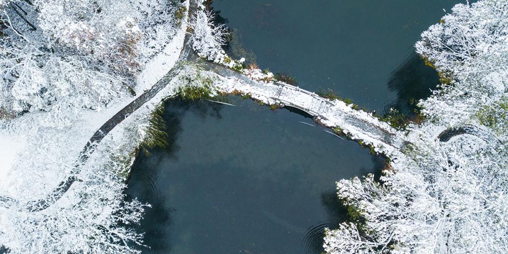 西湖下雪了!