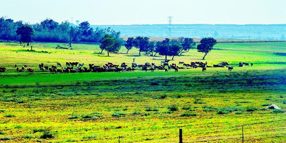 """实拍南非""""风景大道"""""""