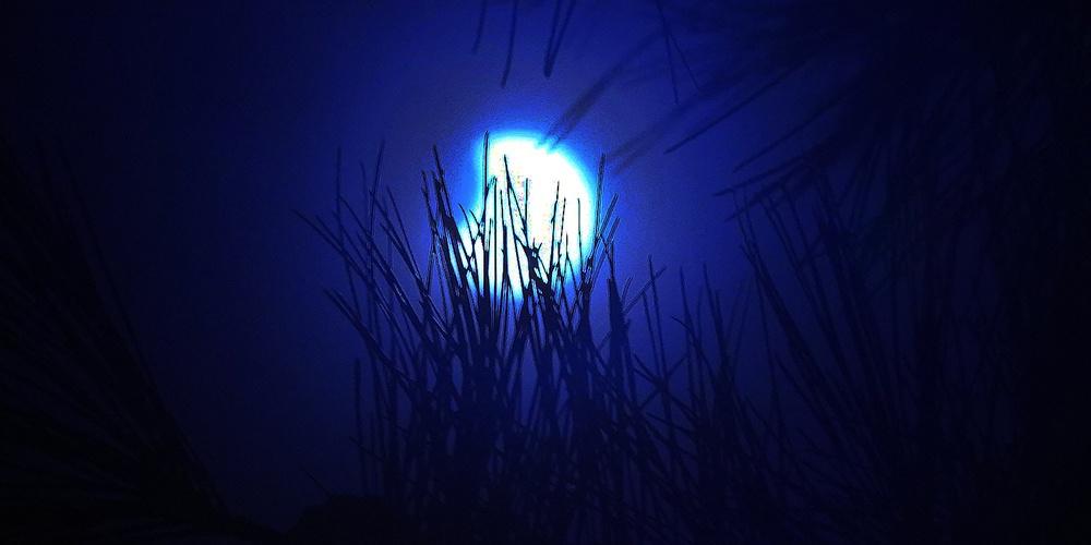 罕见日食景象