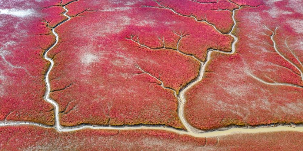 秋日红海滩