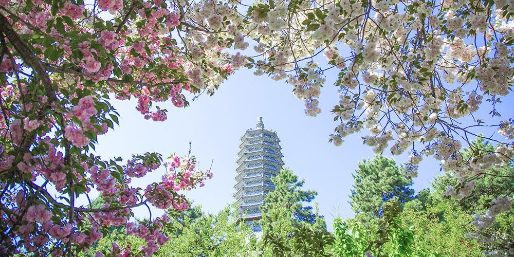 云居寺的春天