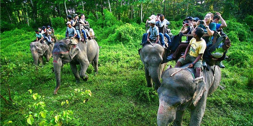 亲密接触大象