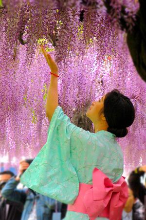 """上海""""紫色瀑布""""如梦如幻"""