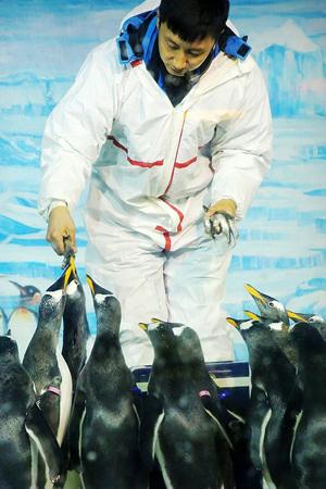 极地动物世界奇遇记