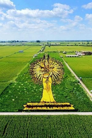 在稻田上作画,你见过吗