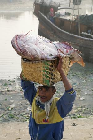 实拍:孟加拉渔民捕获大鱼