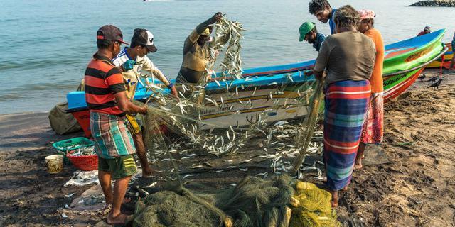 斯里兰卡尼甘布渔港大丰收